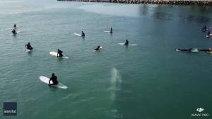 Whale swims beneath surfers off the coast of California