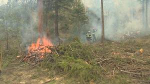 The City of Vernon is leading the charge to pressure the government to change the way it mitigates against forest fires