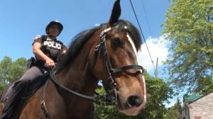 Retiring Murney, the Kingston Police horse, to help pay for 10 new officers