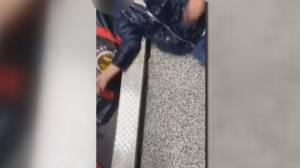Hockey Calgary investigating 'disturbing' locker-room video of player passing out, fighting (02:21)