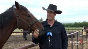 Chuckwagon drivers thankful for High River races after Calgary Stampede cancels Rangeland Derby (01:49)