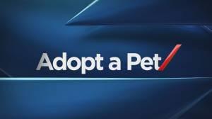 Pet of the Week: Feb 23 (01:18)