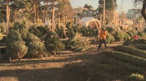 Christmas tree lot looking for new home after 60 years in Kitsilano (01:44)