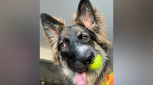 Alberta 'special needs' rescue dog Brodie becomes international sensation
