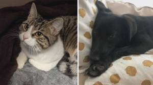 AARCS animals of the week – Blackie and Whip (03:51)