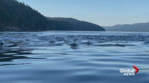 Super pod of white-sided dolphins spotted near Vancouver Island (00:43)