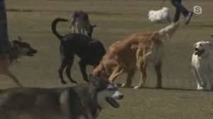 Protecting your pet from kennel cough (06:15)