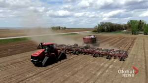 Soil conditions in southeast Alberta a concern despite recent rainfall (01:33)