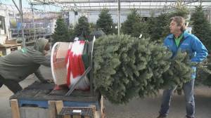 Christmas tree prices soar in Quebec