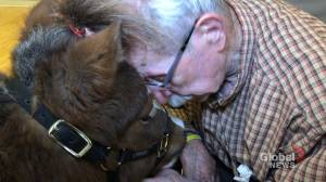 Therapy horse visits veterans in Moncton to cheer them up