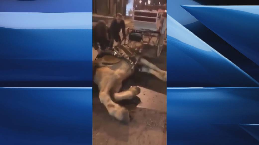 Video appears to show carriage horse collapsing in Griffintown