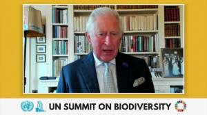 Prince Charles warns UN we are at the 'last hour' when it comes to protecting biodiversity (01:18)