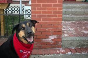 Therapy dog hopes to raise $5,000 for Ronald McDonald House fundraiser (01:52)