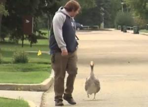 Alberta man bonds with goose