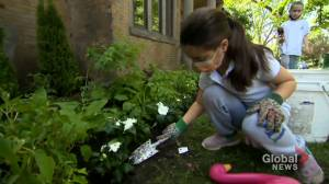 Garden of Hope and Honey: Montreal school launches outdoor learning initiative (02:05)