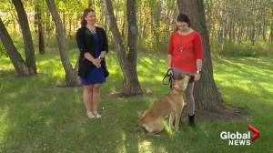 Adopt a Pet with Trixie the German Shepherd (03:18)