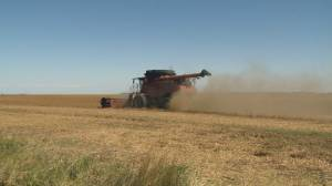Alberta budget 2020: major layoffs projected for Alberta agriculture sector (02:03)