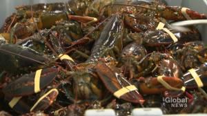 Lobster industry taking a hit over coronavirus