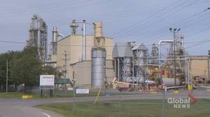 St. Stephen particleboard mill to lay off as many as 75 people