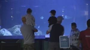 Vancouver Aquarium says goodbye to hundreds of staff and loving patrons (02:00)