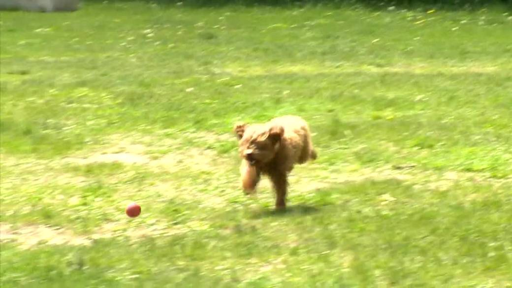 Click to play video: 'Winnipeg dog poisonings appear to be intentional, police warn'