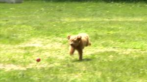 Winnipeg dog poisonings appear to be intentional, police warn (00:27)