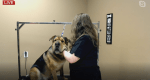 At home dog grooming tips