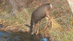 Cranbrook residents rally against plans for deer cull