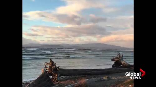 Sunday wind storm brings downed trees and wild waves | Watch News Videos Online