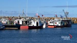 Sipekne'katik First Nation suspends fishery launch indefinitely (02:08)