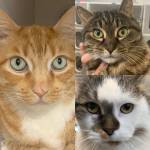 Shelter Pet Project Feb. 14 – Ginger, Phoebe, Spaz