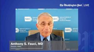 Coronavirus: Fauci expects U.S. vaccine 'widely available' in 2021