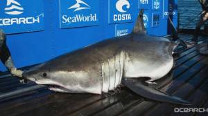OCEARCH gives update on #ExpeditionNovaScotia (06:05)