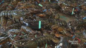 Canadian lobster exports to China soar as U.S. sales plunge amid tariffs