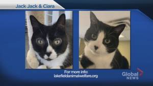 Global Peterborough's Shelter Pet Project – Jack-Jack and Ciara—