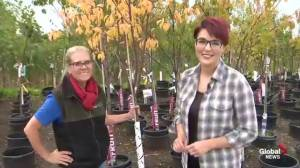 Get Gardening: Fall Prep