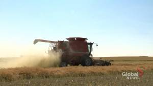 Coronavirus: survey shows Saskatchewan farmers worried about revenue loss (01:44)
