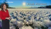 Play video: Frost flowers spotted across B.C.