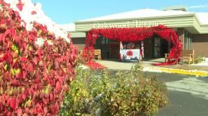 Nova Scotia nursing home residents knit Remembrance Day poppy display (01:48)