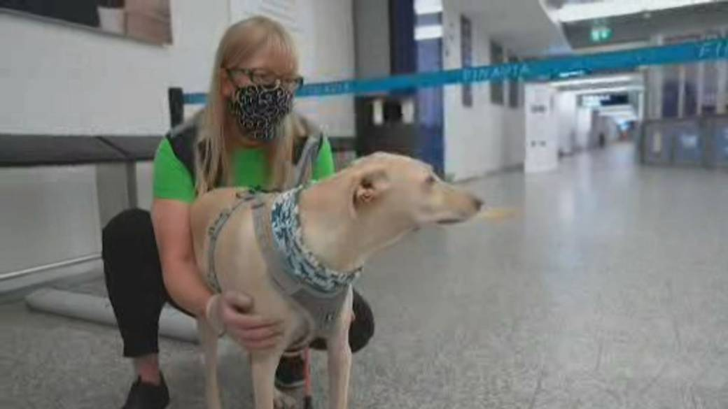 Click to play video 'Finland deploys COVID-19 sniffer dogs at airport'