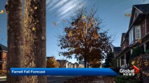 2020 fall forecast: Ontario, Quebec can expect another mild September, October (02:03)