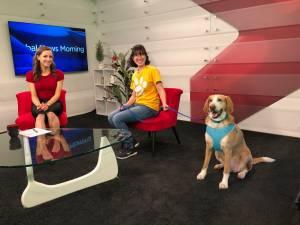 Lakefield Animal Welfare Society and a senior hound named Wanda