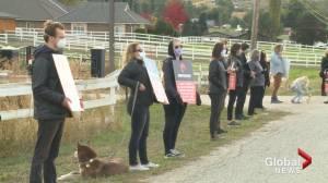 Kelowna activists and farm owner clash at rally (01:49)