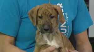 Edmonton Humane Society: Grable + Darla