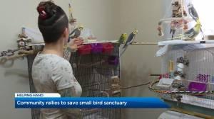 Community rallies to save Kelowna small bird sanctuary (01:28)