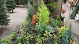 Gardenworks: Winter planter (03:39)