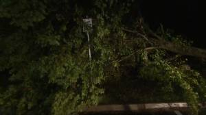 Hurricane Dorian: Trees litter Halifax streets, thousands of people without power after Dorian moves through (01:06)