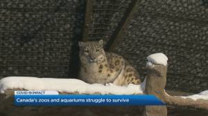 Canada's Accredited Zoos and Aquariums looking forward to warmer days after taking a hard hit amid pandemic restrictions (04:00)