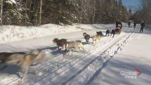 81-year-old thrilled to cross dog sledding off bucket list