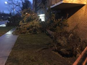 Wind storm causes extensive damage throughout Peterborough area (01:07)